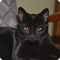 Adopt A Pet :: Bradley - Medina, OH