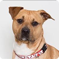 Adopt A Pet :: Henry - San Luis Obispo, CA