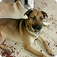 Adopt A Pet :: Rusty & Sandy BLIND BONDED PAI - Struthers, OH