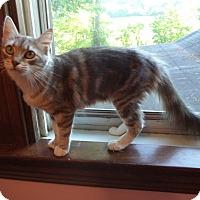 Adopt A Pet :: Robin - St. Louis, MO