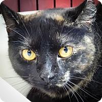 Adopt A Pet :: Emma - Webster, MA