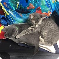 Adopt A Pet :: Stahl - Nuevo, CA