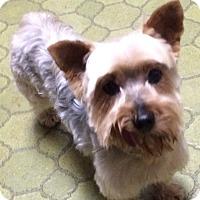 Adopt A Pet :: SAMMIE - Oakland, CA
