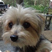 Adopt A Pet :: danny boy - Crump, TN