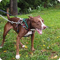 Adopt A Pet :: Coconut - Whitehall, PA