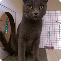 Adopt A Pet :: Lonnie - Bridgeton, MO