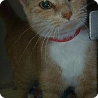Adopt A Pet :: Sunshine - Hamburg, NY
