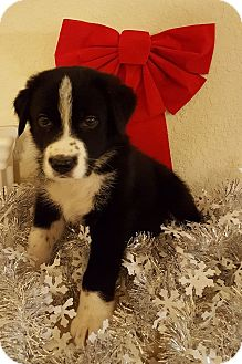 Labrador Retriever Mix Puppy for adoption in Fort Atkinson, Wisconsin - JAKE
