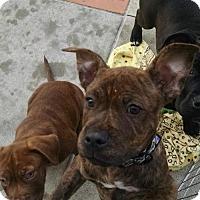 Adopt A Pet :: Turner - Mission Viejo, CA