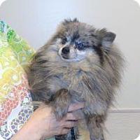Adopt A Pet :: Garbo - Wildomar, CA