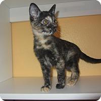 Adopt A Pet :: Waffles - Ridgway, CO