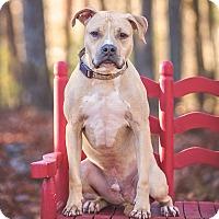 Adopt A Pet :: Bonesy - Atlanta, GA