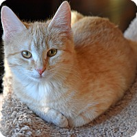 Adopt A Pet :: Bridget - Lombard, IL