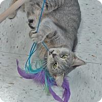 Adopt A Pet :: Kia - Chambersburg, PA