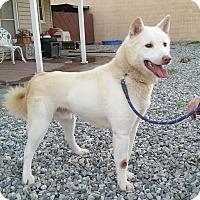 Adopt A Pet :: Riley - Sun valley, CA