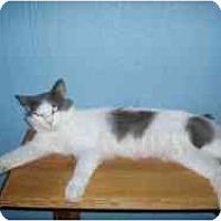 Adopt A Pet :: Montgomery - Hamburg, NY