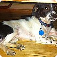 Adopt A Pet :: Chauncey - Crane Hill, AL