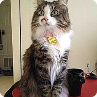 Adopt A Pet :: Auriel - Columbus, OH