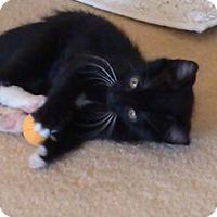 Adopt A Pet :: FiFi - Temecula, CA