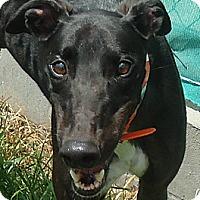 Adopt A Pet :: AMF Tanker - Longwood, FL