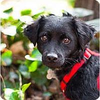 Adopt A Pet :: Kirby-VIDEO!! - Sherman Oaks, CA