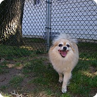 Adopt A Pet :: Nona - South Amboy, NJ