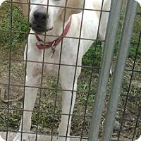 Adopt A Pet :: Crystal - Mount Carroll, IL
