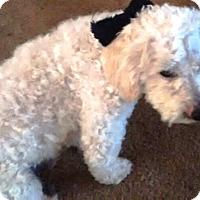 Adopt A Pet :: Otto - Rancho Cucamonga, CA