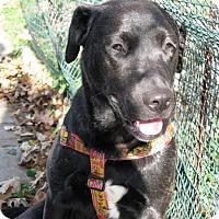 Adopt A Pet :: Chloe - Toledo, OH