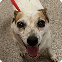 Adopt A Pet :: Lottie - Gainesville, FL