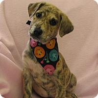 Adopt A Pet :: Georgia - Charlemont, MA