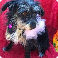 Adopt A Pet :: Lady - Irvine, CA