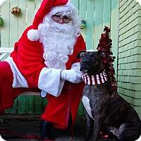 Adopt A Pet :: Huey Lewis - Atlanta, GA