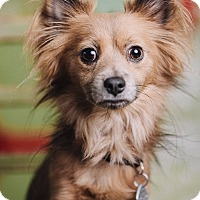 Adopt A Pet :: Benny - Portland, OR