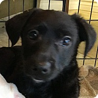 Adopt A Pet :: William - Santa Ana, CA