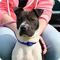 Adopt A Pet :: Kendall - Elyria, OH