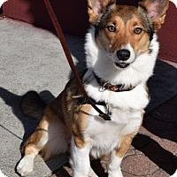 Adopt A Pet :: Chavela (Guardian Assist) - Fremont, CA