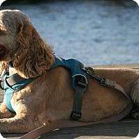 Adopt A Pet :: Milo - Sneads Ferry, NC