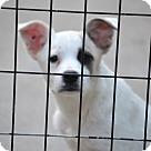 Adopt A Pet :: Tatiana