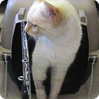 Adopt A Pet :: Cloud - Marlborough, MA