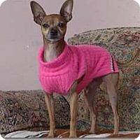 Adopt A Pet :: Caribou - Sedona, AZ