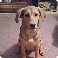 Adopt A Pet :: 384064    Penny - San Antonio, TX