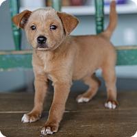 Adopt A Pet :: Sally - San Antonio, TX