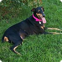 Adopt A Pet :: Cricket--update - New Richmond, OH