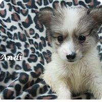 Adopt A Pet :: Andi - Bartonsville, PA