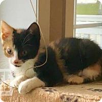 Adopt A Pet :: Natalie - Mendota, IL