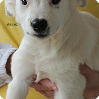 Adopt A Pet :: Jett 25947 - Prattville, AL