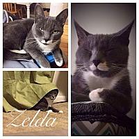 Adopt A Pet :: Zelda - Garner, NC