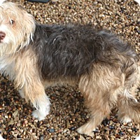 Adopt A Pet :: Peabody - Woonsocket, RI