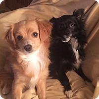 Adopt A Pet :: Jill - San Leandro, CA